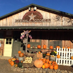 pumpkin patch chehalis