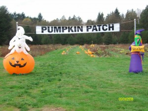 pumpkin patch toledo